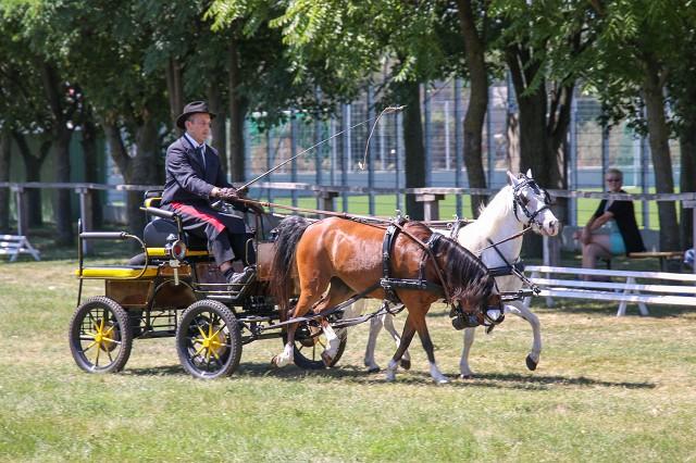 Pferdefest 2017